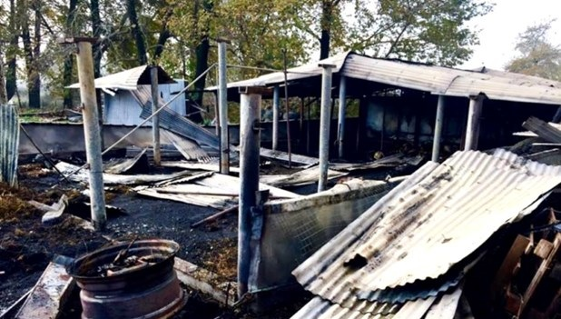 Κάηκαν 60 ζώα από φωτιά σε ποιμνιοστάσιο στο Μικρό Κεφαλόβρυσο Τρικάλων