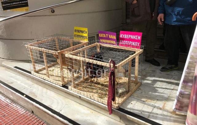 Με κότες, κοκόρια και… γραβάτες στο υπουργείο Υγείας [εικόνες]