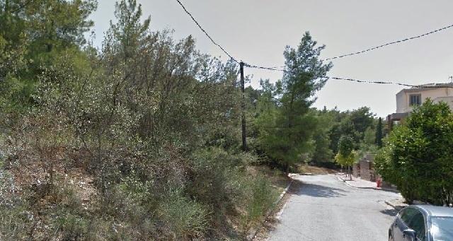 Επιχείρηση για επικίνδυνα δέντρα από Δήμο και Δασαρχείο στη Γορίτσα