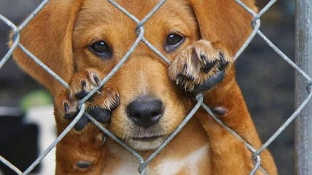 «Καμπάνα» σε 49χρονο Βολιώτη για κακοποίηση ζώων