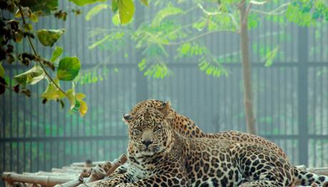 Aττικό Πάρκο για τη θανάτωση των τζάγκουαρ: «Ντροπή υποκριτές!»