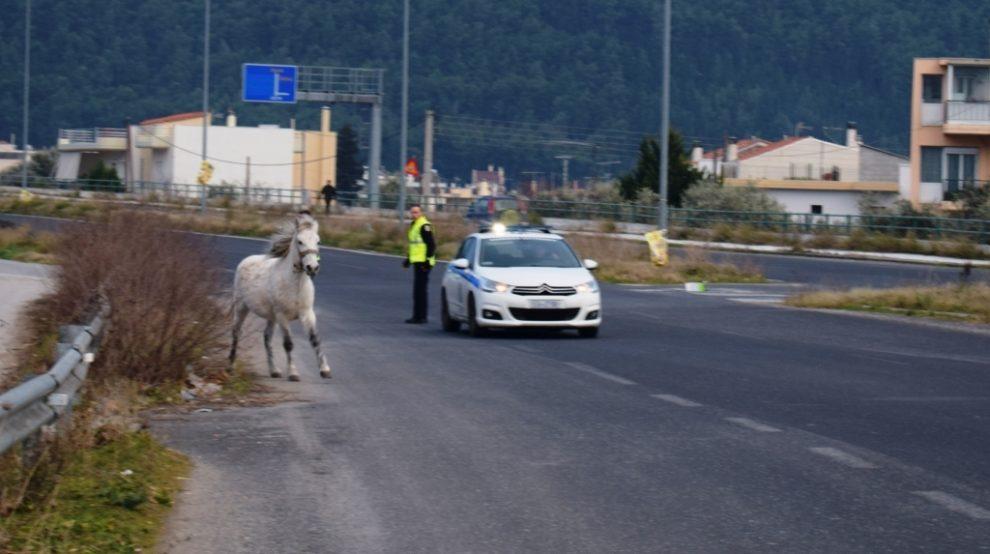 Αλογο έτρεχε στην εθνική