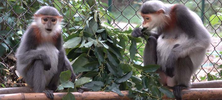Σκότωσαν και έφαγαν μαϊμού σε ζωντανή μετάδοση στο Facebook. Συνελήφθησαν οι δράστες