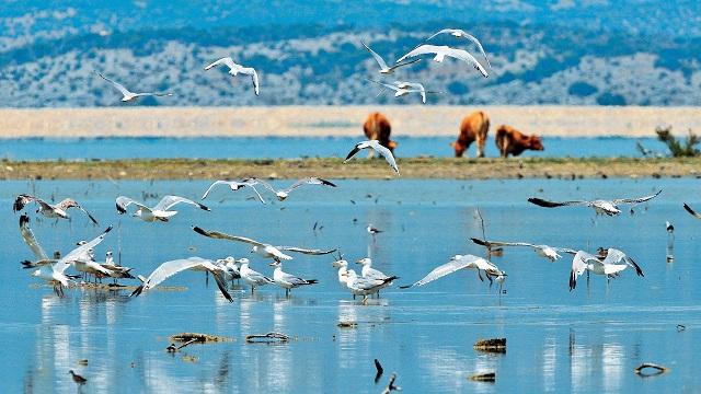 Η Ελλάδα διεκδικεί Ευρωπαϊκό βραβείο με το έργο της Λίμνης Κάρλα