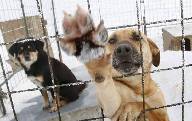 Εκκληση για ζωοτροφές για το κυνοκομείο στον Αλμυρό