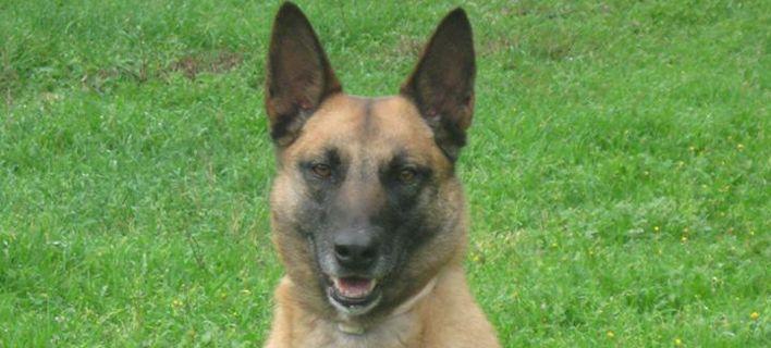 Θλίψη στη Δίωξη Ναρκωτικών: Πέθανε η σκυλίτσα Agnes