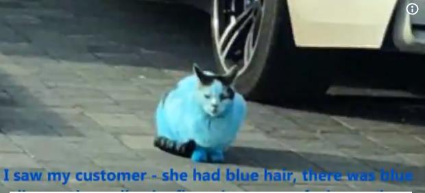 Και ξαφνικά οι γάτες και οι σκύλοι στην Αγγλία έγιναν μπλε σαν στρουμφάκια