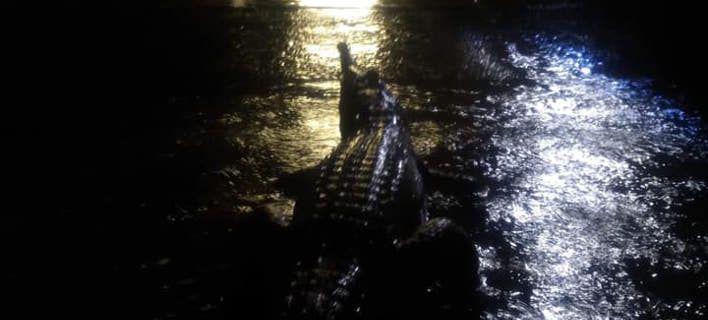 Σαρωτικές πλημμύρες στην Αυστραλία - Κροκόδειλοι βγήκαν στους δρόμους [εικόνες]