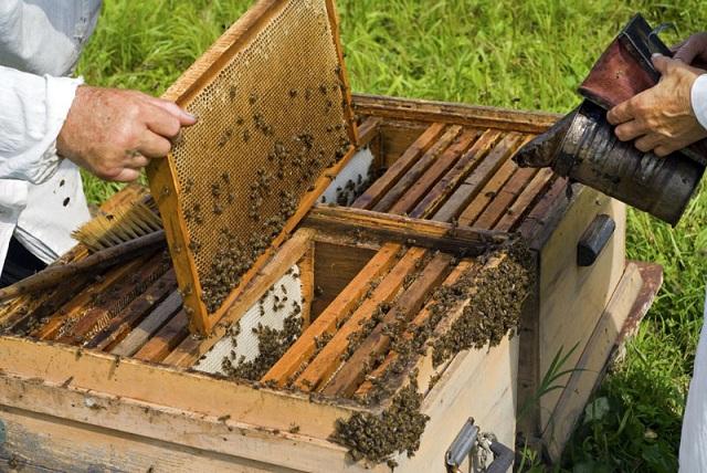 Χειροπέδες σε 24χρονο που έκλεψε κυψέλες μελισσών