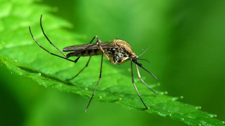 «Τα κουνούπια αφανίζονται γιατί πρώτη φορά στην ιστορία τους συνάντησαν τον άνθρωπο»