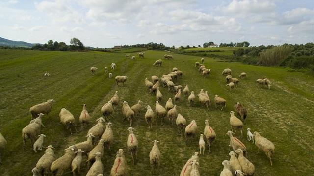 Κτηνοτρόφοι «πιάστηκαν» στα χέρια για τα ζώα τους