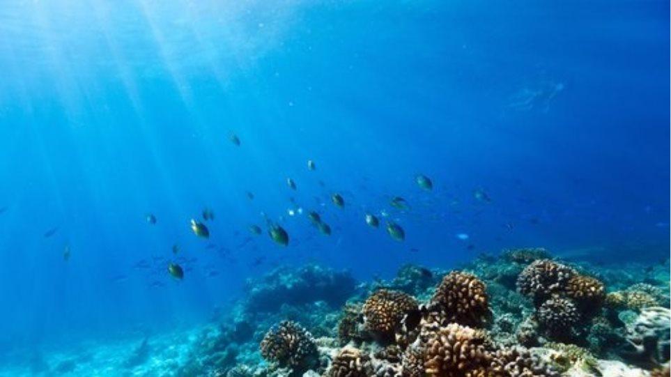 Ο πρώτος κοραλλιογενής ύφαλος στη Μεσόγειο εντοπίστηκε στην Ιταλία