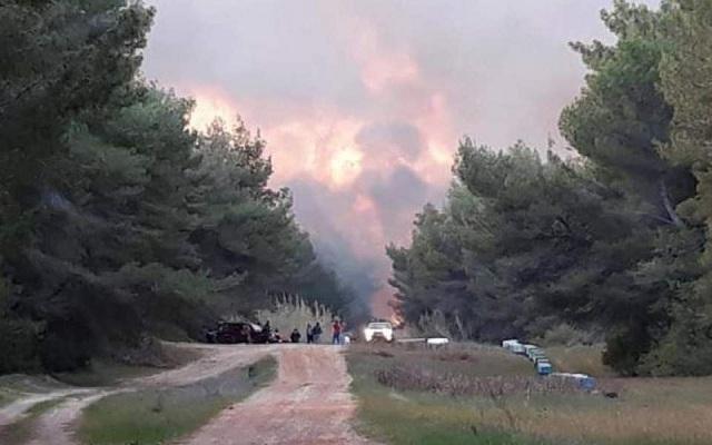 Ανεξέλεγκτη η πυρκαγιά στο προστατευόμενο δάσος της Στροφυλιάς (φωτογραφίες)