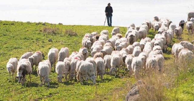 Σε απόγνωση οι κτηνοτρόφοι: Αγωνιούν 1.500 οικογένειες στη Μαγνησία