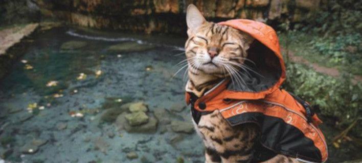 Η πιο διάσημη travel blogger με 1,3 εκατ. ακολούθους... είναι γάτα [εικόνες]