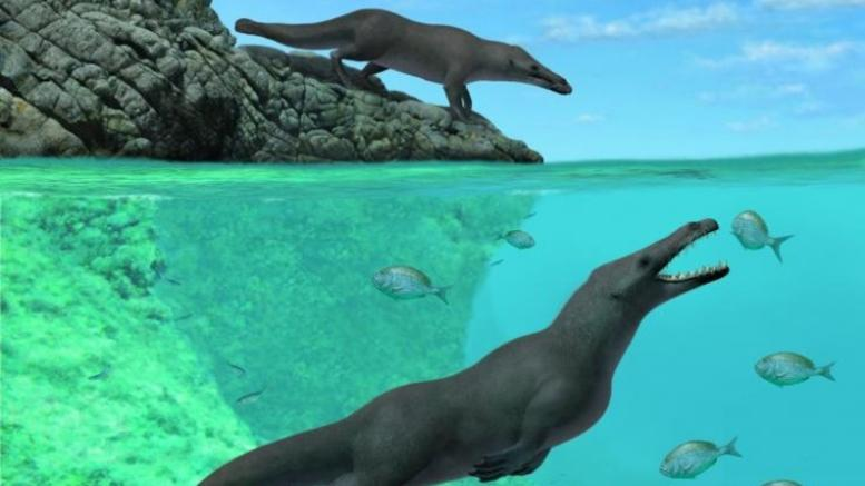 Φάλαινα περπατούσε και κολυμπούσε πριν από 42,6 εκατ. χρόνια