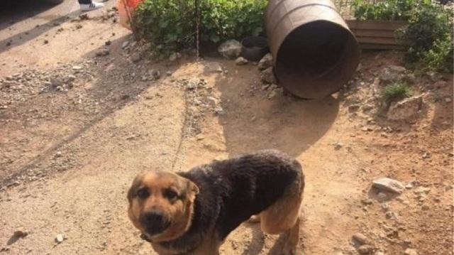 Συνέλαβαν ιδιοκτήτη σκύλων που τα άφηνε αλυσοδεμένα σε άθλια κατάσταση