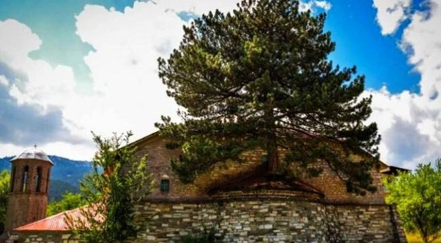 Σπάνιο φαινόμενο: Δέντρο φύτρωσε μέσα στο ιερό εκκλησίας [εικόνες]