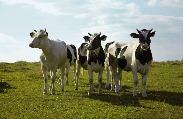 Στοχευμένη προκήρυξη για τη βιολογική κτηνοτροφία