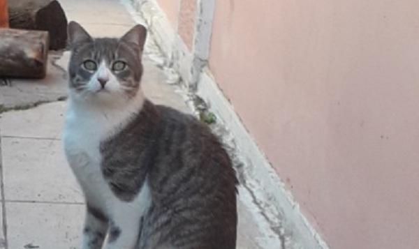 Δράσεις του Δήμου Αλοννήσου για τα αδέσποτα ζώα