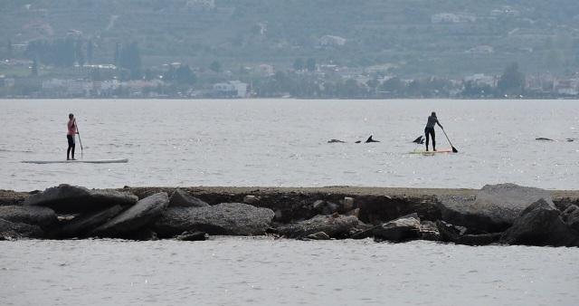 Δελφίνια κολυμπούν δίπλα σε ανθρώπους στον Αναυρο