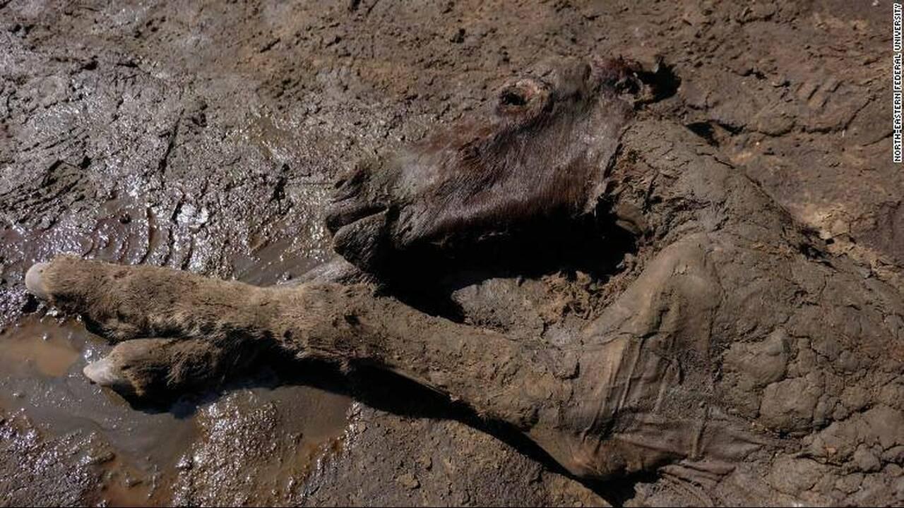 Βρέθηκε πουλάρι 42.000 ετών με υγρό αίμα και ούρα - Στόχος η κλωνοποίησή του