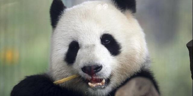 ΟΗΕ: Ένα εκατομμύριο είδη απειλούνται με εξαφάνιση