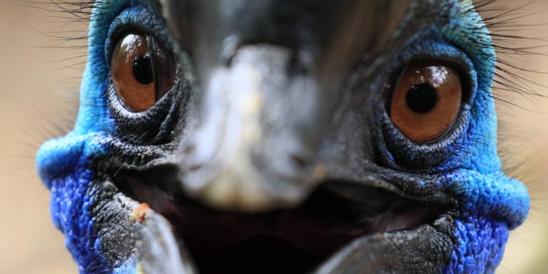 Πωλείται το πιο επικίνδυνο πουλί στον κόσμο -Σκότωσε μέχρι & το αφεντικό του
