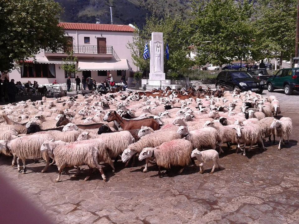 Κρήτη: Χιλιάδες πρόβατα στην εκκλησία για να πάρουν… ευλογία