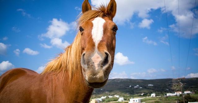 Αλογο έκοβε βόλτες στο κέντρο του Βόλου