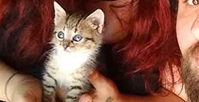 Ασυνείδητοι σούβλισαν ένα μικρό γατάκι στην Κρήτη