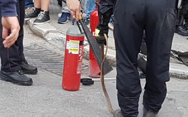 Πυροσβέστες απομάκρυναν φίδι από αυλή σπιτιού στον Βόλο