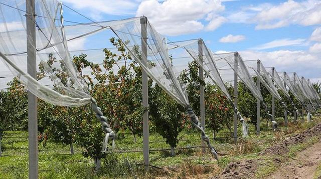 Σημαντικά τα αντιχαλαζικά δίκτυα στη γεωργία