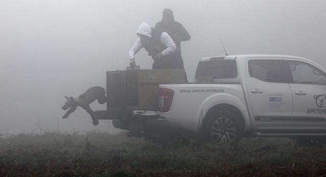 Φλώρινα: Επέστρεψαν στη φύση πέντε ορφανά αρκουδάκια [εικόνες]