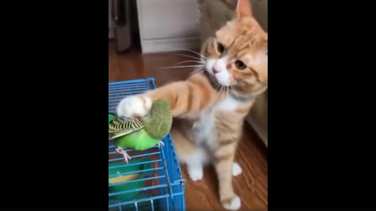 Το βίντεο που έγινε viral: Το τρυφερό χάδι της γάτας στο παπαγαλάκι