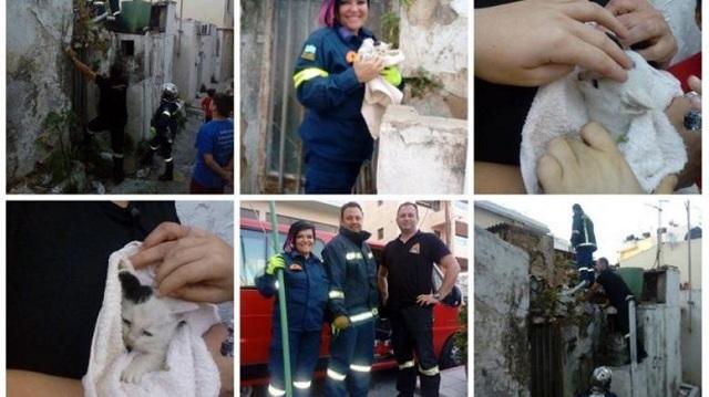 Πυροσβέστες έσωσαν εγκλωβισμένο γατάκι που έκλαιγε σπαρακτικά