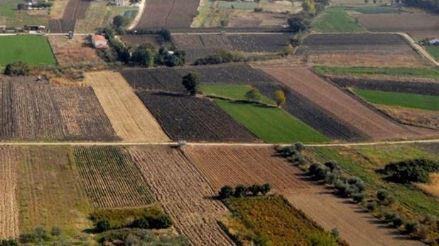 Τεράστια ζήτηση για χωράφια στη Λάρισα λόγω φαρμακευτικής κάνναβης