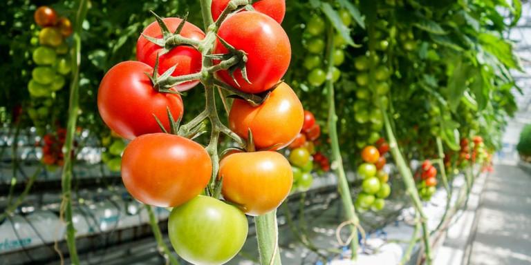 Επιπλέον κονδύλια για βιολογικές καλλιέργειες στη Θεσσαλία