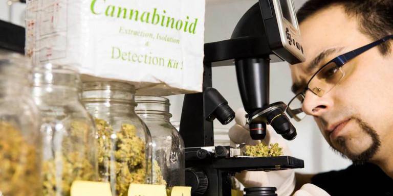 Ο σομελιέ της... μαριχουάνας: Πληρώνεται αδρά για να εισπνέει τον καπνό της