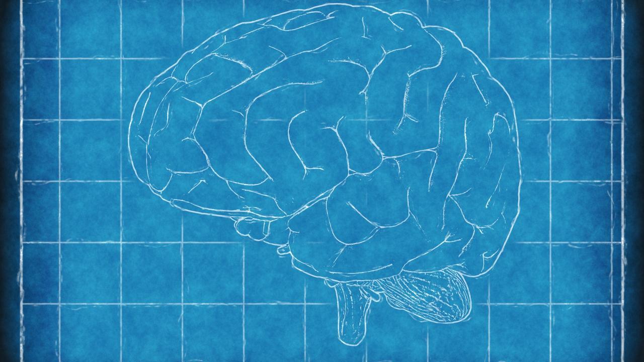 Πώς το Διαδίκτυο αλλάζει τον εγκέφαλο του ανθρώπου – Τι έδειξε μεγάλη έρευνα
