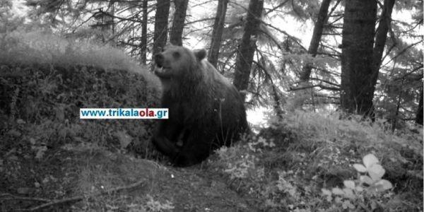 Αρκούδα στα Τρίκαλα «εισέβαλε» σε χωριό για λίγο μέλι