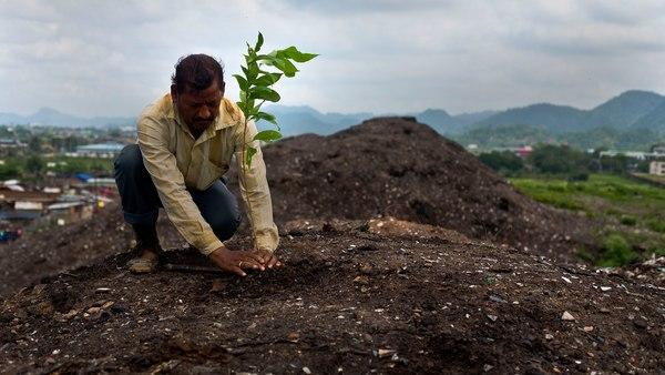 Ο Άνθρωπος ξεκληρίζει τη χλωρίδα: 600 είδη φυτών εξαφανίστηκαν τα τελευταία 250 χρόνια