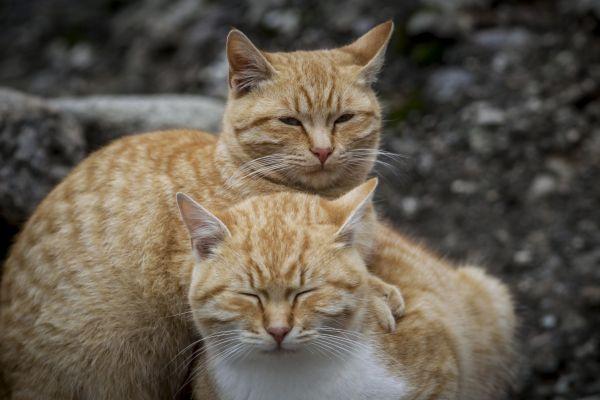 Κινητοποίηση για εγκλωβισμένα γατάκια