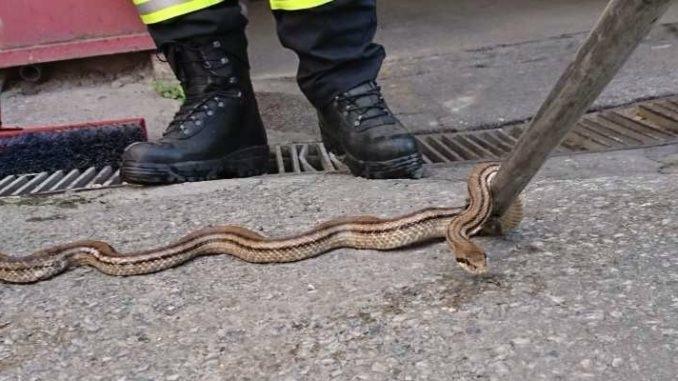 Μας... έζωσαν τα φίδια στο κέντρο του Βόλου