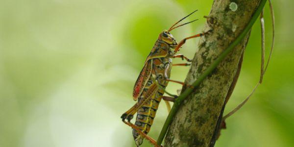 Βιβλικές σκηνές στη Σαρδηνία - Σμήνη από ακρίδες κατασπαράζουν καλλιέργειες