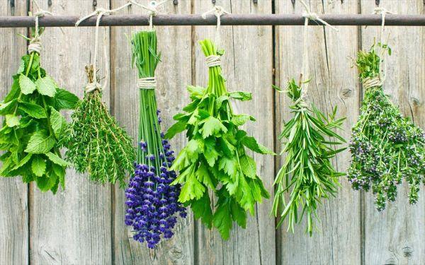 Αφιέρωμα στα βότανα από το «Ανοιχτό Χωριό»