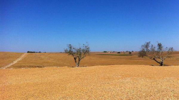Κίνδυνος ερημοποίησης για το 1/3 των εδαφών της Ελλάδας