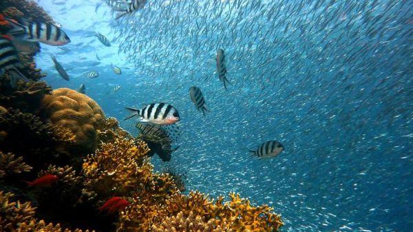 Μικρό ψάρι, μεγάλη καρδιά: O ερωτικός χωρισμός πονάει και τα ψάρια