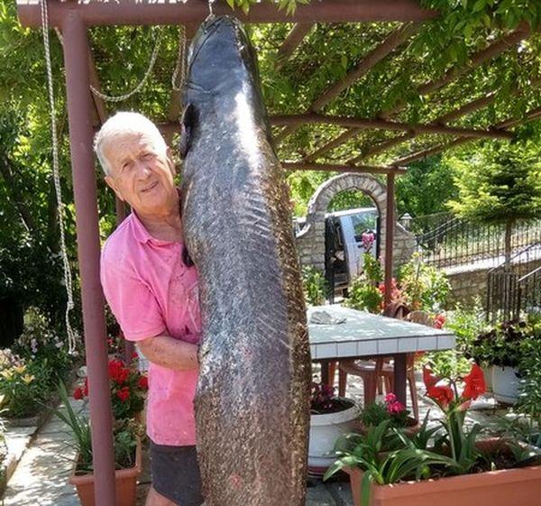Επιασε γουλιανό-τέρας 70 κιλών στη λίμνη Πλαστήρα