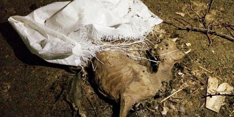 «Φυλάκιζε» πρόβατα και τα άφηνε να πεθάνουν